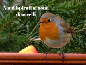 Nomi uccelli